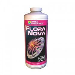 floranova_bloom946-500x500